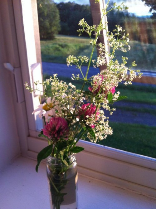 This was a quick arrangement of wild flowers I kept at my bedside during week I spent in bed last summer with pneumonia while on vacation -- they helped!
